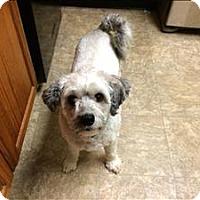 Adopt A Pet :: Quincy - Neosho, MO