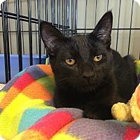 Adopt A Pet :: Carnation - Island Park, NY