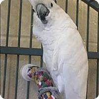 Adopt A Pet :: Melanie - Monterey, CA