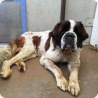 Adopt A Pet :: Alexander - San Francisco, CA