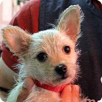 Adopt A Pet :: ROTINI - San Francisco, CA