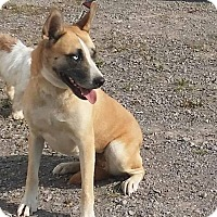 Adopt A Pet :: Myah - Kenton, OH
