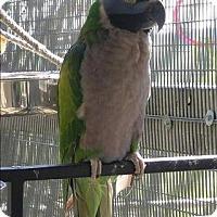 Adopt A Pet :: Sophie - Elizabeth, CO