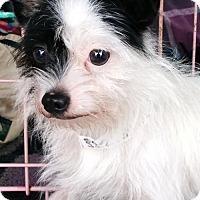 Adopt A Pet :: JOKER - Anderson, SC