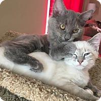 Adopt A Pet :: Prince - Columbia, SC