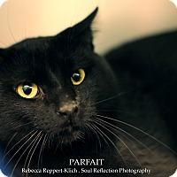 Adopt A Pet :: Parfait - Appleton, WI