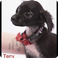 Adopt A Pet :: Terry - Simi Valley, CA