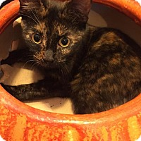 Adopt A Pet :: Claudette 	161795 - Atlanta, GA
