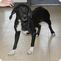 Adopt A Pet :: Chloe - Union Grove, WI