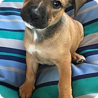 Adopt A Pet :: Moon - Toledo, OH
