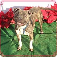 Adopt A Pet :: HANK - Marietta, GA