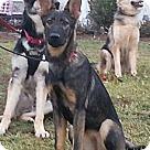 Adopt A Pet :: Zsa Zsa