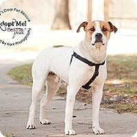 Adopt A Pet :: Stanley - Medina, OH