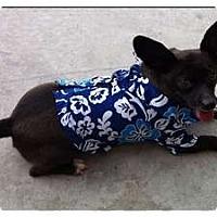 Adopt A Pet :: Despereaux - Fowler, CA