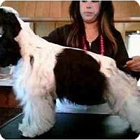 Adopt A Pet :: Moo - Tacoma, WA