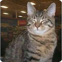 Adopt A Pet :: Roscoe - Richmond, VA