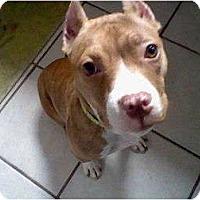 Adopt A Pet :: Katy Grace - Wauwatosa, WI