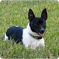 Adopt A Pet :: Bogart - Mocksville, NC