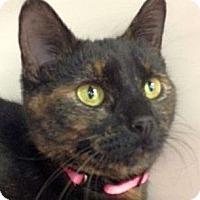 Adopt A Pet :: Powderfpuff - Green Bay, WI