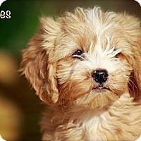 Adopt A Pet :: Bubbles - Albany, NY