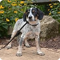 Adopt A Pet :: Freckles - Marlton, NJ