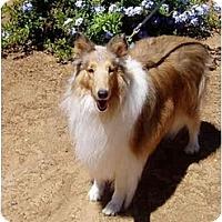 Adopt A Pet :: Hunny - Gardena, CA