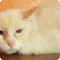 Adopt A Pet :: MacDuffy - Ennis, TX