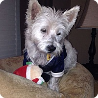 Adopt A Pet :: Charlie - Frisco, TX
