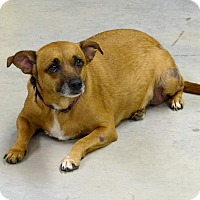 Adopt A Pet :: Zoey--RESCUED! - Marlinton, WV