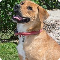 Adopt A Pet :: Annie - Elmwood Park, NJ