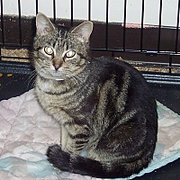 Adopt A Pet :: Macy - Morganton, NC