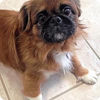 Adopt A Pet :: Leo - Fennville, MI