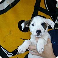 Adopt A Pet :: Winston - Oviedo, FL