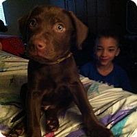 Adopt A Pet :: Dusty - Ogden, UT