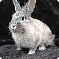 Adopt A Pet :: River - Watauga, TX