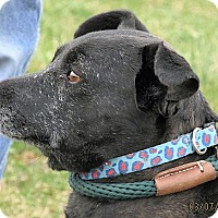 Adopt A Pet :: Dora - Germantown, MD