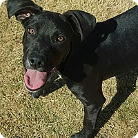 Adopt A Pet :: Bosley - Las Cruces, NM