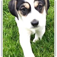 Adopt A Pet :: Carlton - Mechanicsburg, PA