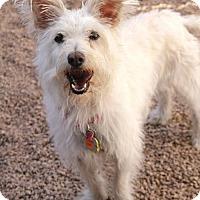 Adopt A Pet :: Chloe - Phoenix, AZ