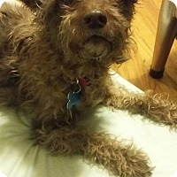 Adopt A Pet :: Chocolate - Alden, NY