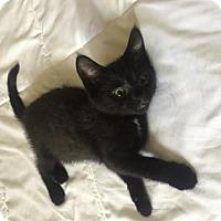 Adopt A Pet :: LJ @ Canton PetSmart Habitat Michigan Ave - Taylor, MI