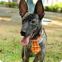 Adopt A Pet :: Jaimie - Surrey, BC