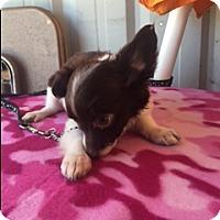 Adopt A Pet :: ZIMIRI - Elk Grove, CA