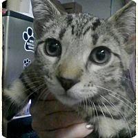 Adopt A Pet :: Brady - Trevose, PA
