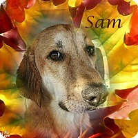Adopt A Pet :: Sam - Crowley, LA
