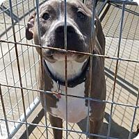 Adopt A Pet :: Quinn - Colfax, IL