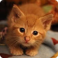 Adopt A Pet :: Pippa - Carlisle, PA