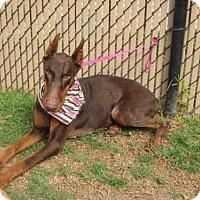 Adopt A Pet :: *HAZEL - Norco, CA