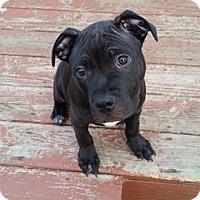Adopt A Pet :: Hagrid - Grand Rapids, MI