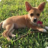 Adopt A Pet :: Princess Snow White - Royal Palm Beach, FL